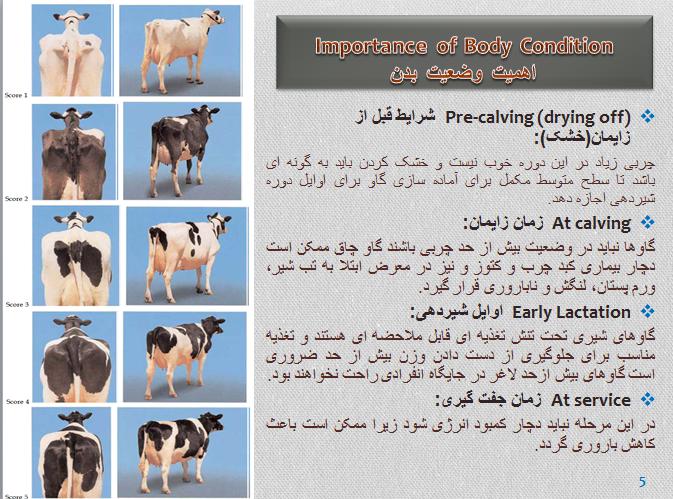 دانلود مقاله ارزیابی گاو شیری و گاو گوشتی ppt پاورپوینت ، دانلود رایگان مقاله ارزیابی گاو شیری و گاو گوشتی ppt پاورپوینت ، ارزیابی کیفیت گاوهای شیر ده
