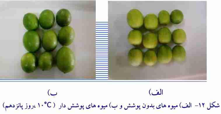مقایسه میوه های با پوشش و بی پوشش بعد 15 روز