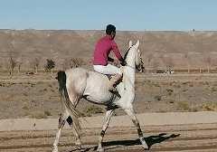 مسابقه اسب دوانی در خراسان جنوبی بیرجند شوکت آباد