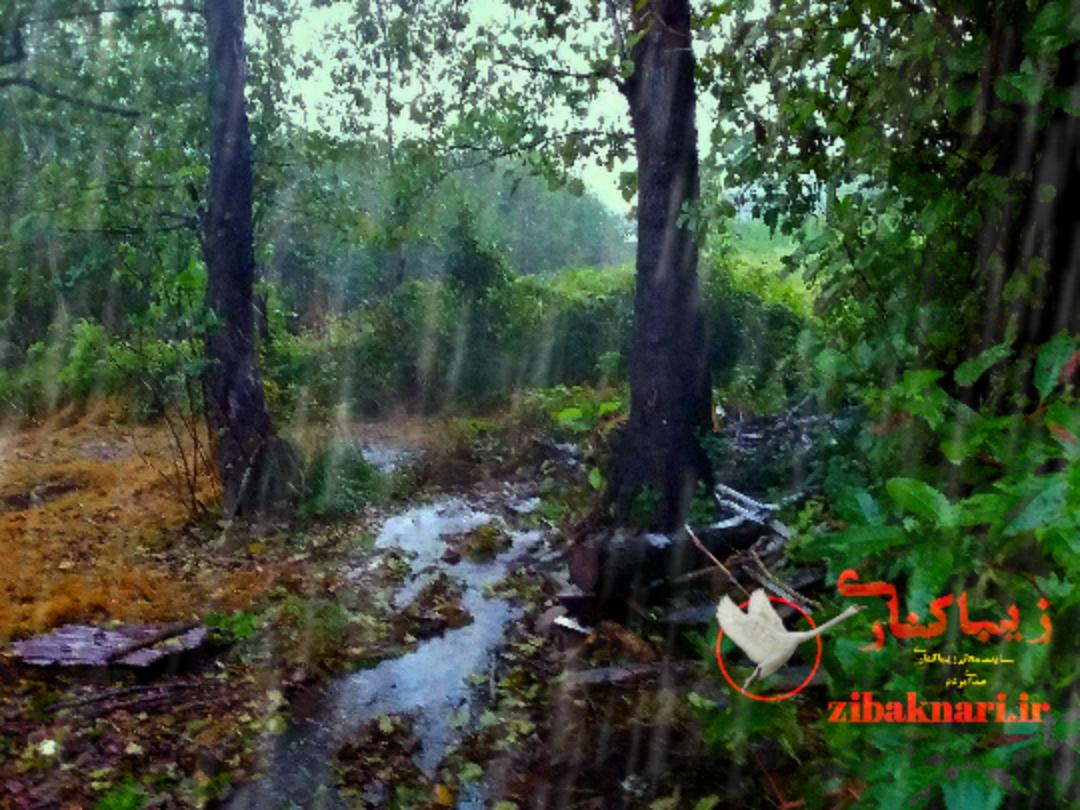 زیباکنار در یک روز بارانی در فصل پاییز