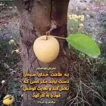 عکس نوشته حدیث امام علی ع طاعت از خدا